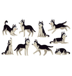 Husky dog poses cartoon running sitting vector