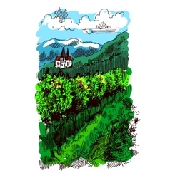 landscape with vineyard vector image