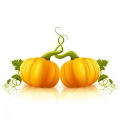 Orange pumpkins vector