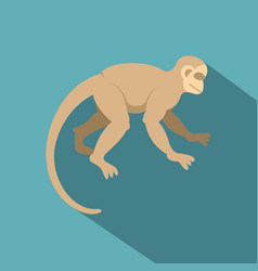 white capuchin icon flat style vector image vector image