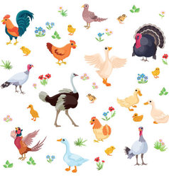 Farm birds and their ducklings in cartoon style as vector image