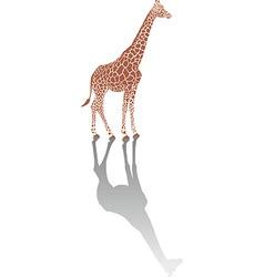 Giraffe with shadow vector image vector image