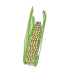 corn cob hand drawn icon vector image