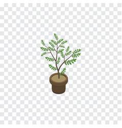 isolated houseplant isometric fern element vector image