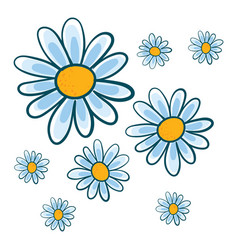 white chamomile flowers on white background vector image