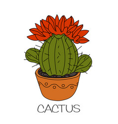 Cactus with red flowers vector