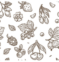 fruits raspberries and berries monochrome sketches vector image
