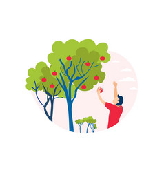 Man picking apple off tree cutout vector