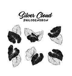 monstera foliage hand drawn set vector image