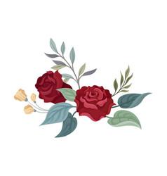 Pair burgundy roses on a vector