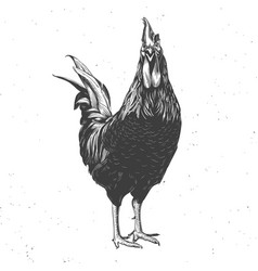 Rooster black and white vector