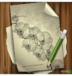 Set of Hand Drawn Various Elements vector image