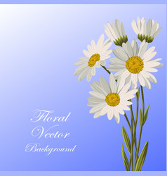 Beautiful white daisies vector