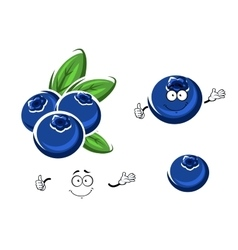 Cartoon fresh blueberry fruits on white vector image