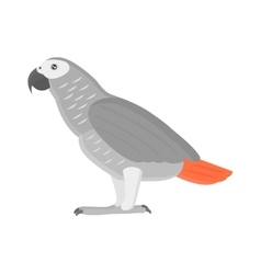 Cartoon parrot isolated bird vector image
