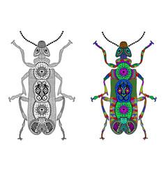 Entangle stylized color and black-white beetle vector