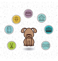 Isolated dog and pet icon set design vector