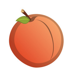 isolated grapefruit vector image