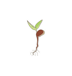 Seed plant tree organic logo vector