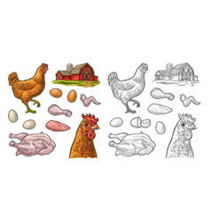 set chicken whole leg wing egg and farm vector image