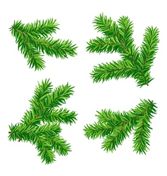 set of fir branches vector image vector image