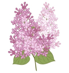 flowers of lilac for your design vector image
