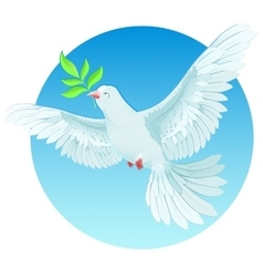 White dove holding green twig international peace vector