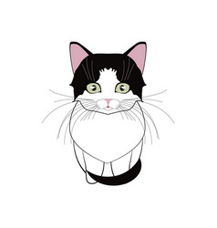 a little gentle favorite kitten girl vector image