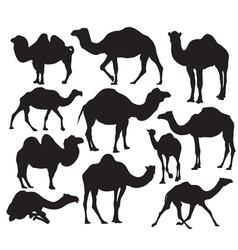Camel silhouette vector