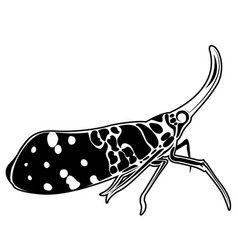 fulgorid planthoppers in eps10 vector image