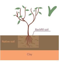 Correct tree planting flat vector