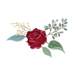 Dark red rose on a white vector