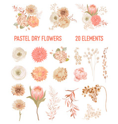 elegant dry flowers protea pale roses vector image