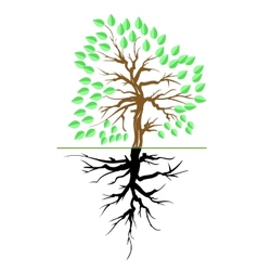 Green Tree with Root vector image