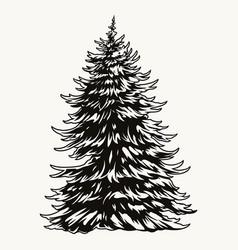 lush fir tree vintage concept vector image