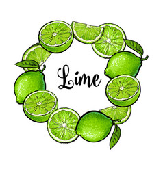 round frame of green lime fruits with place for vector image