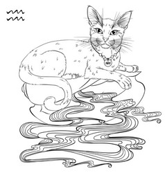 Aquarius cat zodiac line art vector