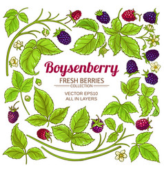 boysenberry branches elements set on white vector image