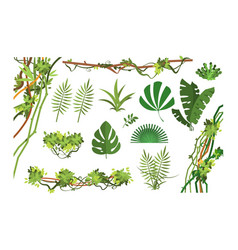 jungle vine cartoon rainforest leaves and liana vector image