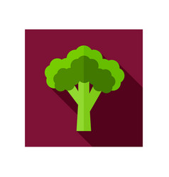 broccoli flat icon vegetable vector image