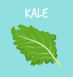 fresh kale on blue balckground vector image
