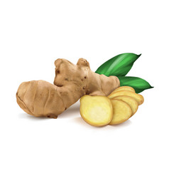 Ginger roots vector