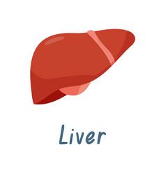 Healthy liver internal organ human anatomy vector