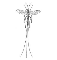 Ichneumon fly vintage vector