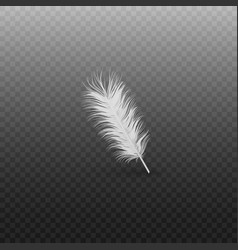 soft realistic white bird feather with fluff of vector image