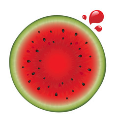 watermelon with drops vector image