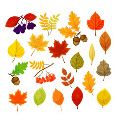 big set with different autumn berries vector image