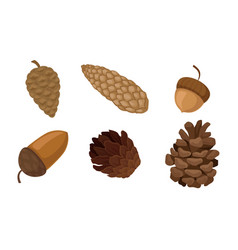 Fir cones and acorns isolated on white background vector