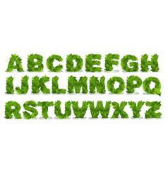 green leaf fonts vector image