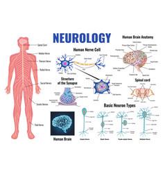 Neurology and human brain set vector